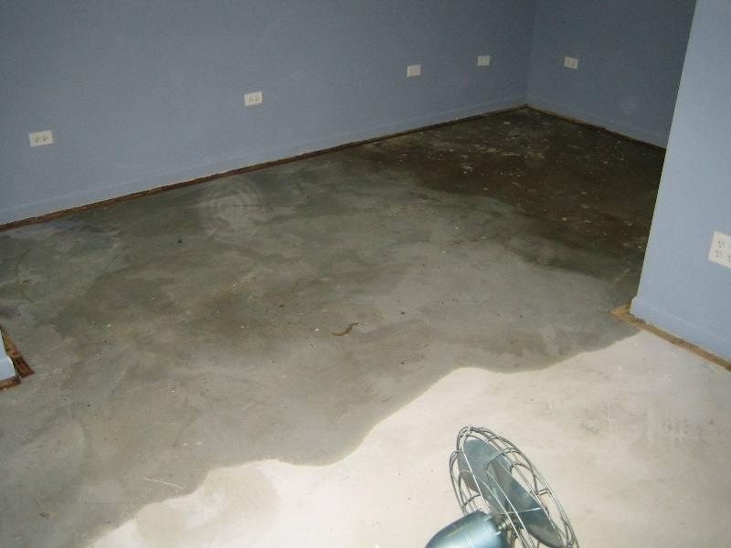 How To Get Black Mold Out Of A Carpet Home The Honoroak